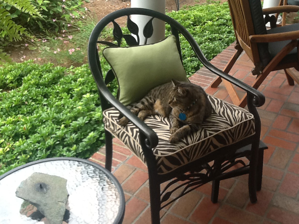 Cat On Outdoor Chair With Pillow And Cushion Ronica S